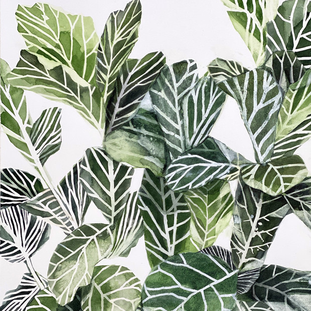 Plant Life Series
