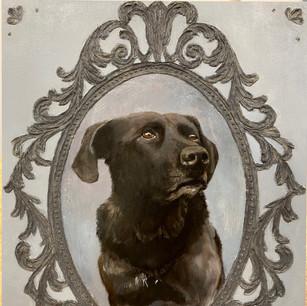 Izzy, Rescue dog