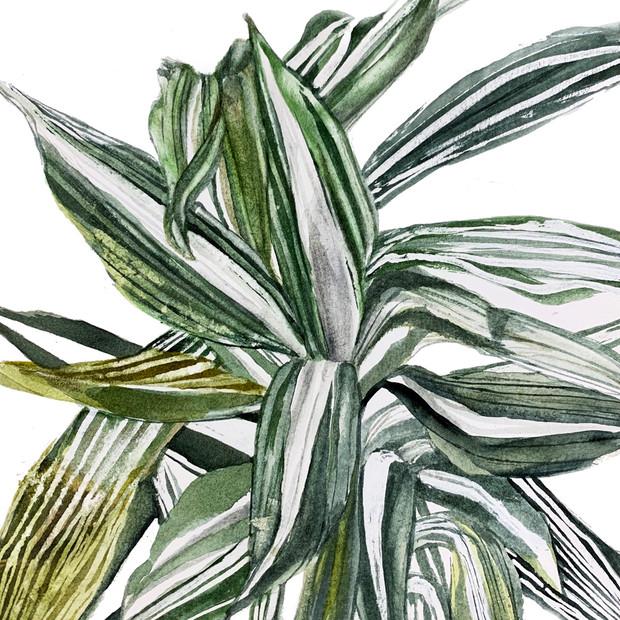 Plant Life #2