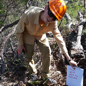 Bandicoots Trail Cameras Work Experience