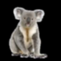 AdobeStock_16918362%20(1)_edited.png