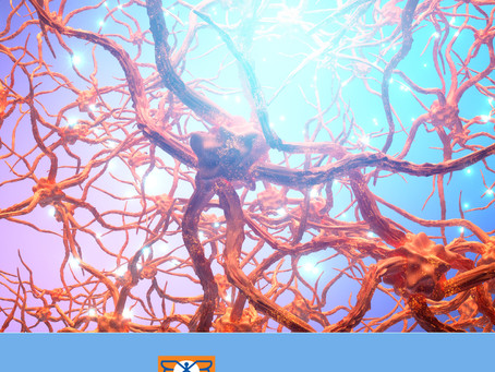 Brain Health – How Your Brain Works cont..