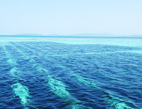 生モズク。珊瑚礁の海で育つミネラルの海藻。
