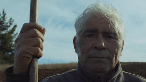Felipe Schuster - El Árbol