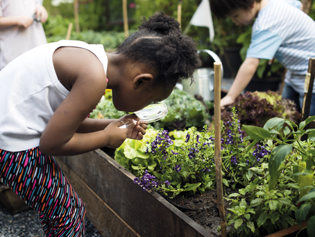 What's the point of a community garden?