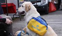 Vacances accueil chien guide handicap