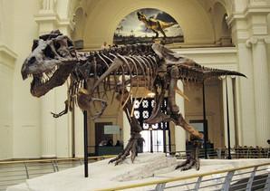 sue_field_museum.jpg