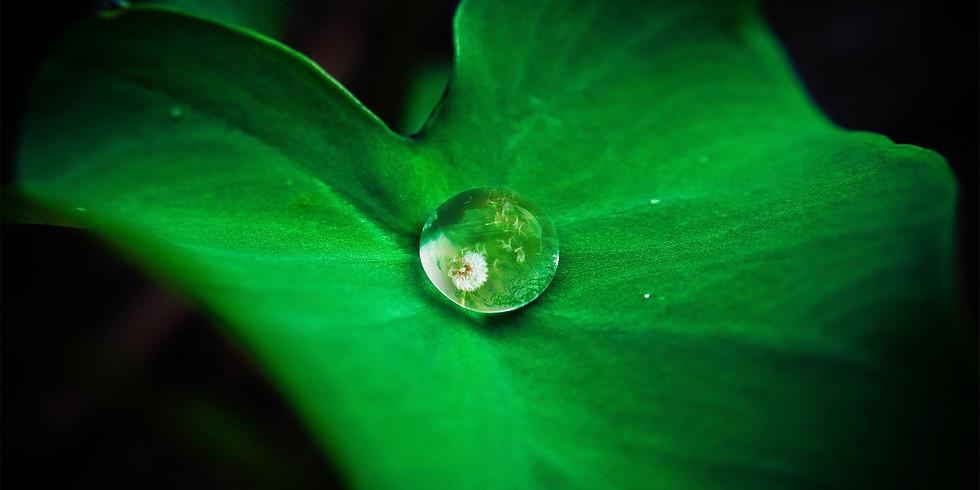 La voie de la méditation de pleine conscience : de la tempête intérieure à l'acceptation de soi