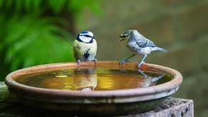 L'écoute active et l'expression de soi, des compétences relationnelles