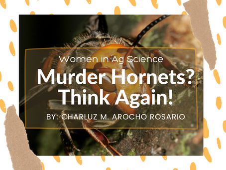 Murder Hornets? Think again!
