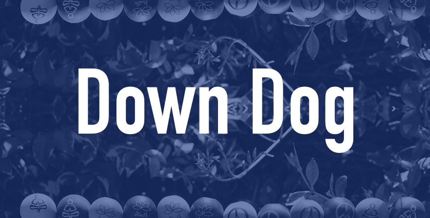 Down Dog  QTY=12
