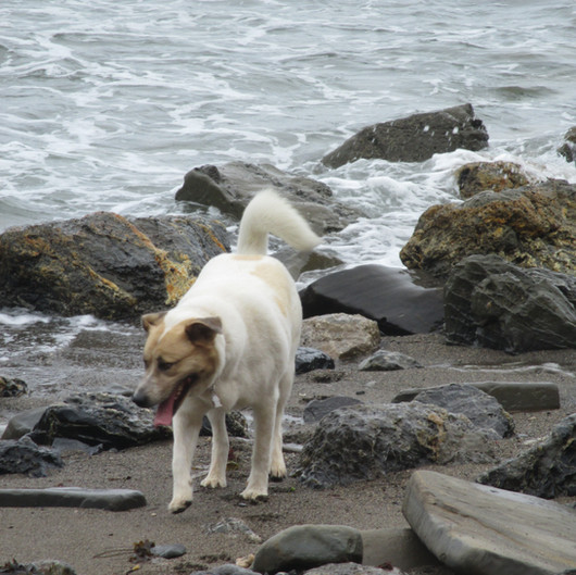 Harlows first day at the beach! 2013-08-