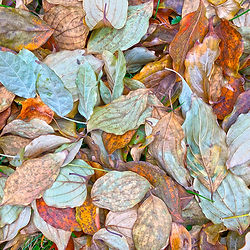 colorfull leaves, closeup of leaf pile, pile of leaves