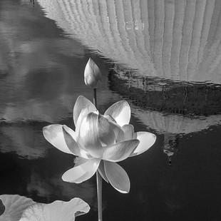 FlowerWithConsrvReflection.jpg