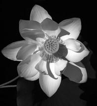 BW_FLOWER.jpg