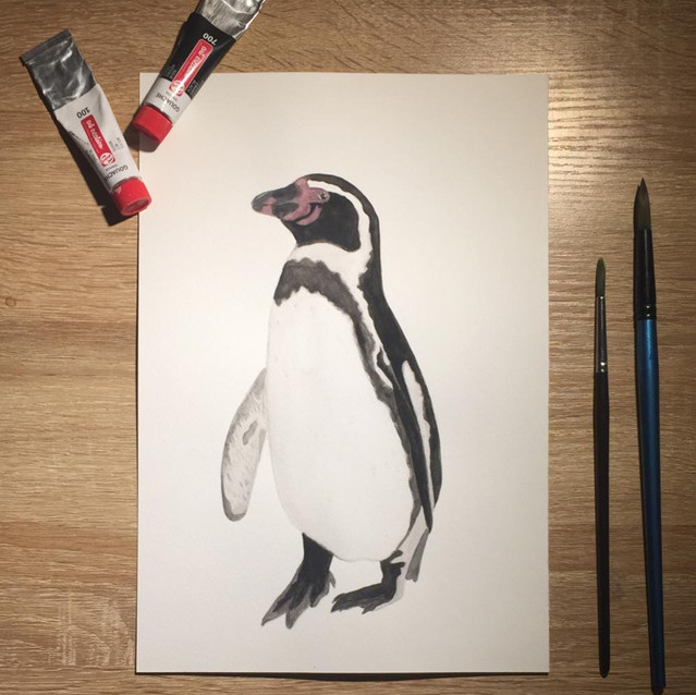 35. Pingüino de Humboldt