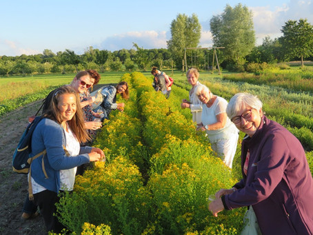 Lokaal verhaal | Kruidenthee van Marlies Engels, Polderkol