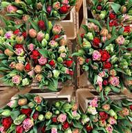 Tijdens de tulpenroute exclusieve tulpen te koop