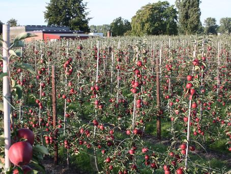 Lokaal verhaal | Fruitboerderij van familie Klaren-Zieleman in Dronten