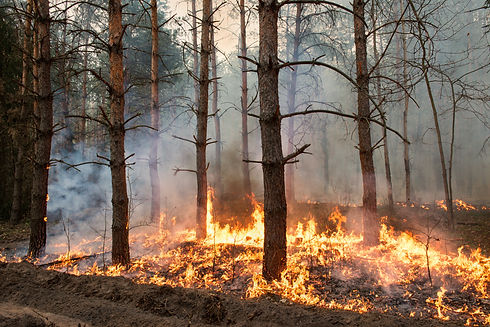 Forest fire. Using firebreak for stoping