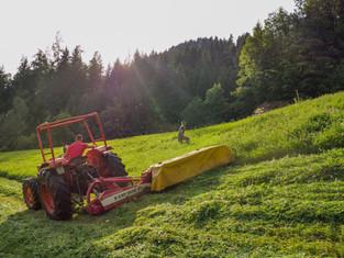 michi_traktor_mähen.jpg