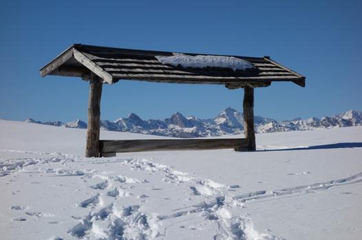 winter futterstelle.JPG