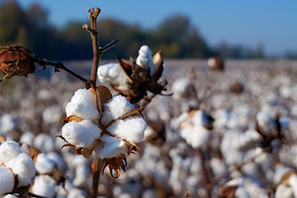 Dry weather hits Australia cotton and wool production