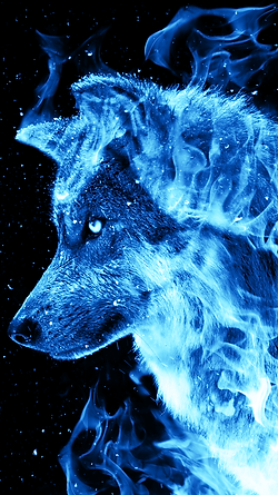 Install Ice Fire Wolf Wallpaper And Have An Amazing Collection Of Blue Wallpapers Live Depicting A