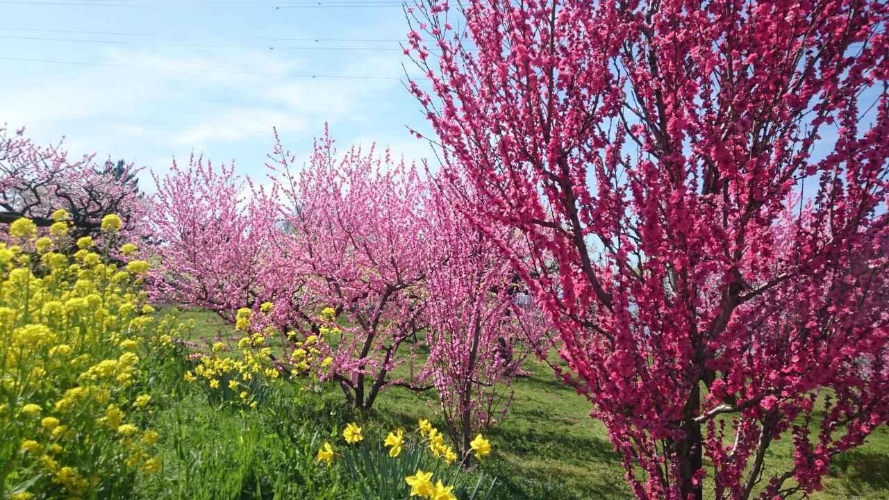 Spring around nizi