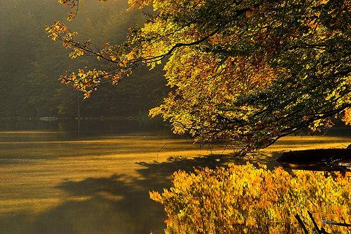 Schwarzwaldtour im Herbst (Halbtageskurs)