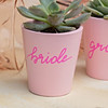 THE PINK CACTI