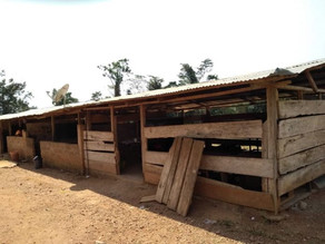 Pupils of Nsonyameye D/A Primary School study in dreadful wooden structures-Peter Abaje, Assemblyman