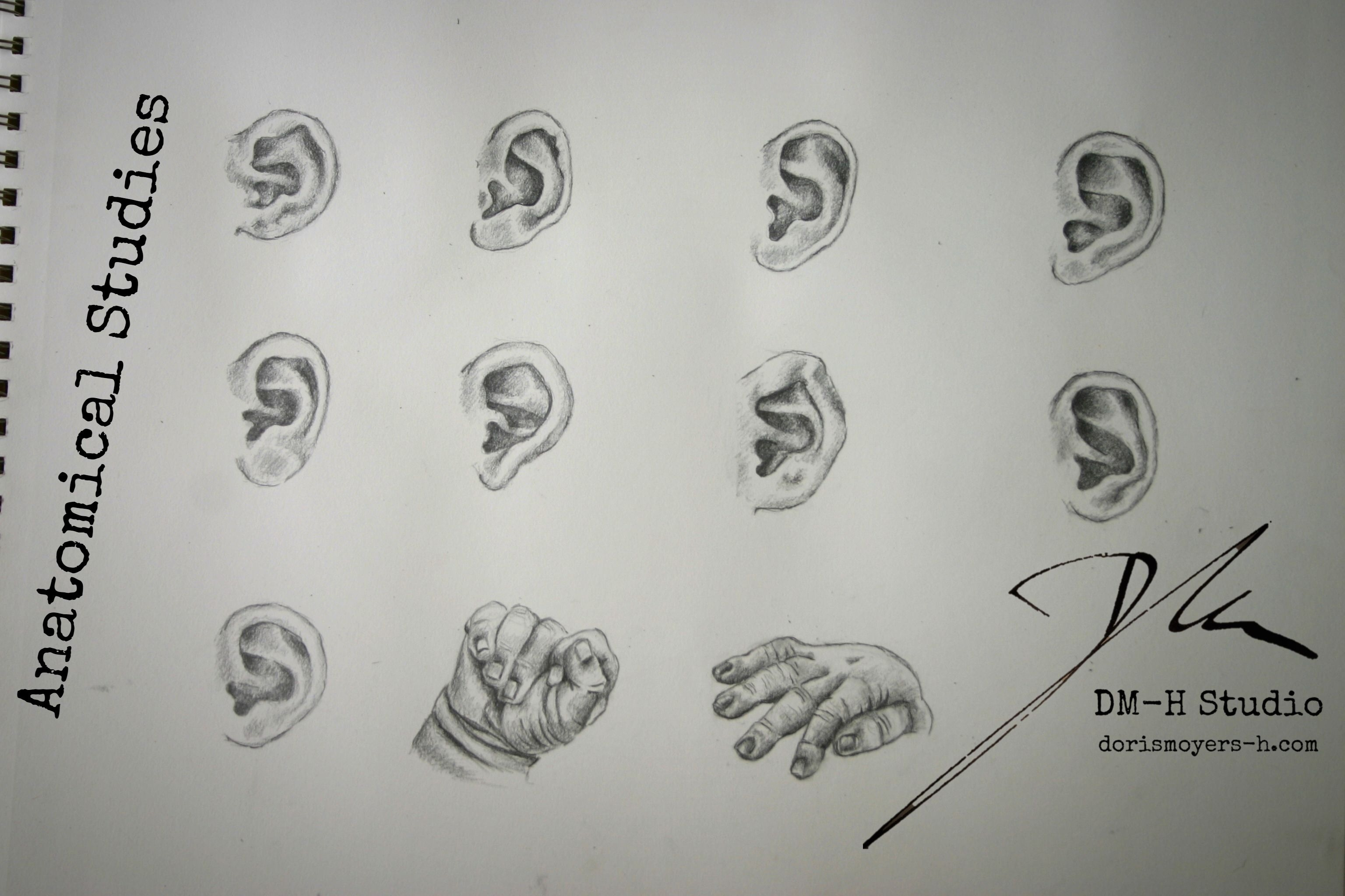 Anatomical Studies.jpg