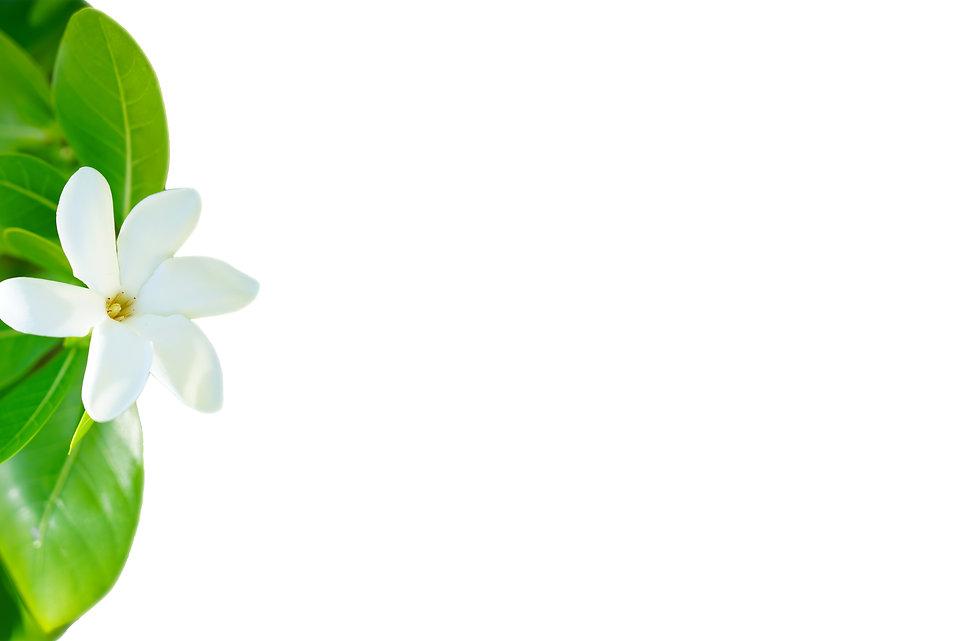 Tiare Tahitissss Flower.jpg