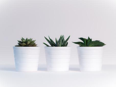 5 Unique Houseplants For Your Apartment