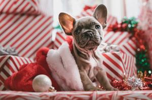 Pet Friendly Apartments for Rent Winnipeg