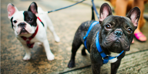 Pet Friendly Apartments for Rent Victoria | Ironclad Properties Inc.