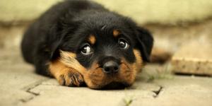 Pet Friendly Apartments for Rent in Winnipeg | Ironclad Properties Inc.