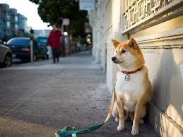 Правила утримання собак в місті