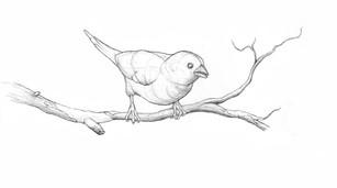 Vogel für Infoplakat