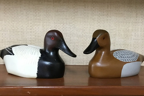 Painted Canvasback Pair