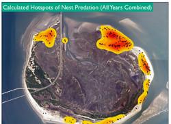 Hot Spots of Predation