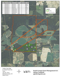 South Georgia Forest Mgmt