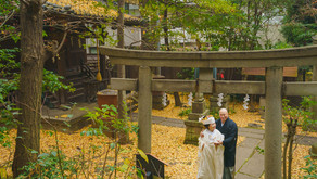 金色の絨毯の上で - 赤坂氷川神社での結婚式