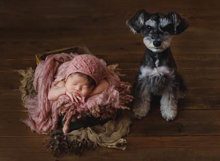 愛犬ちゃんも赤ちゃん返りするんです♪