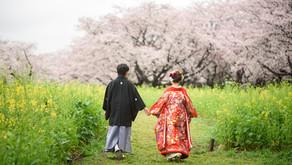 桜と花畑満開の昭和記念公園で