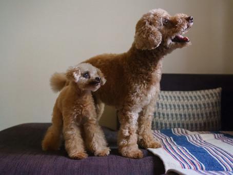家族の一員としての愛犬撮影