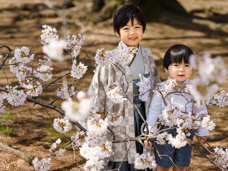 桜満開での七五三撮影