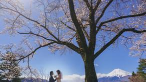 桜シーズンの河口湖ロケーションフォト