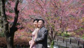 インドネシアから来られたお二人の、桜ロケ